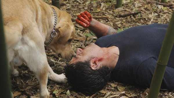 Back on the Island, Jack Shephard (Matthew Fox) has just stopped the place from becoming Atlantis and is woken up by Vincent the dog.