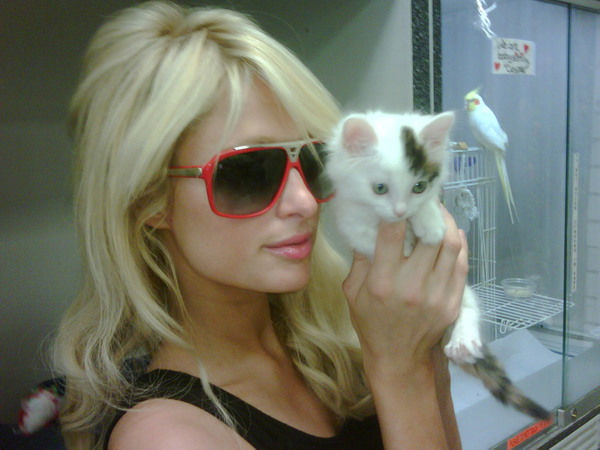 Paris Hilton adopted a kitten named Munchkin in August 2010.