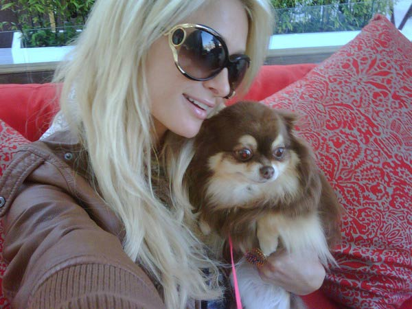Paris Hilton posted this photo of her long-haired chihuahua Harajuku in August 2010. The two lounged by the pool at Drai's Hollywood nightclub.
