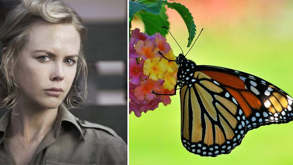 "<div class=""meta ""><span class=""caption-text "">Nicole Kidman has a fear of butterflies. (Pictured: Nicole Kidman in a scene from 'Australia'. / A monarch butterfly) (Twentieth Century Fox Film Corporation / flickr.com/nietnagel)</span></div>"