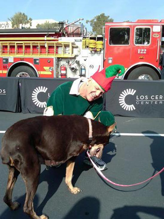 Garth the Elf and a friendly dog at the Stuff-A-Bus event at Los Cerritos Center on Thursday, Nov. 18, 2010. <span class=meta>(KABC)</span>