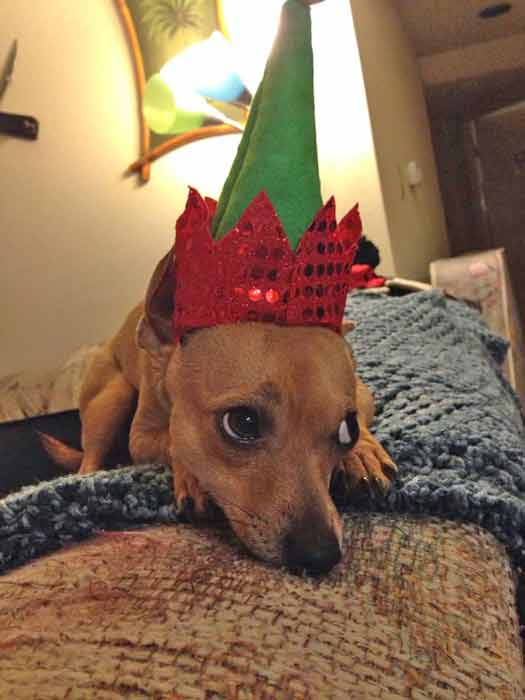 ABC7 viewer Heather Deaver shared this snapshot of Rocky. Use #ABC7HomeForTheHolidays on Facebook, Twitter and Instagram to share your holiday photos with ABC7. We&#39;ll feature some of the best on our newscasts and here on abc7.com! <span class=meta>(ABC7 viewer Heather Deaver)</span>