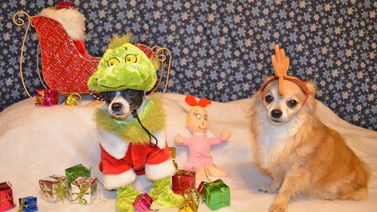 Denise Savala shared this snapshot of Olivia and Osito dressed up in their best holiday gear. <span class=meta>(ABC7 viewer Denise Savala)</span>
