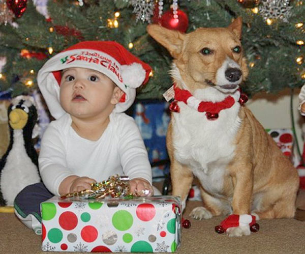 "<div class=""meta ""><span class=""caption-text "">Baby's First Christmas! Happy holidays from the most amazing baby and his wonderful doggie.   (ABC7 Photo/ Annette Mestas from the San Fernando Valley)</span></div>"