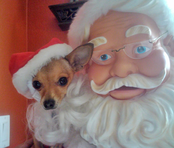 Chihuahua Chewie poses with Santa.  Merry Christmas and happy holidays from Belinda Rangel.   <span class=meta>(ABC7 Photo&#47; Belinda Rangel)</span>