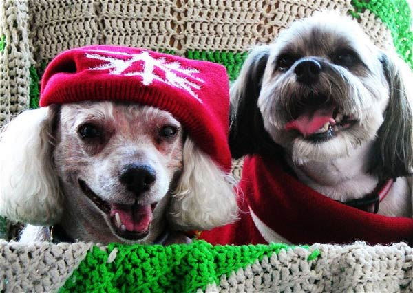 Even though we are two old rescue dogs &#40;11 years old&#41; we still like to dress up. Just want to wish everyone a Merry Christmas and a good 2011. Love, Lucy and Olivia <span class=meta>(ABC7 Photo&#47;Bud Untiedt of Fillmore)</span>