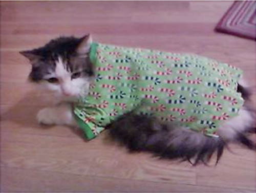 "<div class=""meta ""><span class=""caption-text "">Happy holidays from Nicky the Cat.  (ABC7 Photo)</span></div>"
