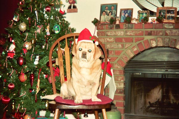 Earl wishes you all a Merry Christmas!  <span class=meta>(ABC7 Photo&#47; Gary Knox of Ontario)</span>