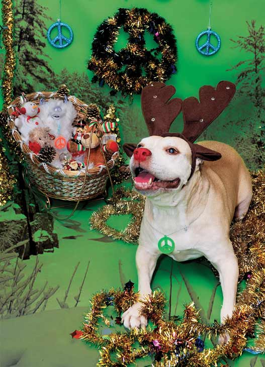 Rescue pup Daisy loves the holidays! <span class=meta>(ABC7 Photo&#47; Katy Winn)</span>