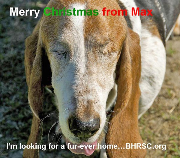 "<div class=""meta image-caption""><div class=""origin-logo origin-image ""><span></span></div><span class=""caption-text"">Merry Christmas from Basset Hound Rescue of SoCal.  (ABC7 Photo/ Laurie McCulloch)</span></div>"