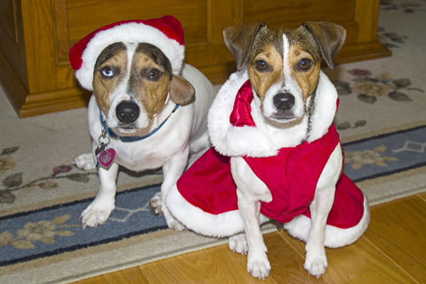 Happy holidays from Jackson and Holly. <span class=meta>(ABC7 Photo&#47;Linda Calkins of Fountain Valley)</span>