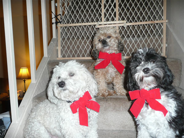 Happy holidays from Sassy, Nolo and Mandy.   <span class=meta>(ABC7 Photo&#47; The Lloyd family from Staton)</span>