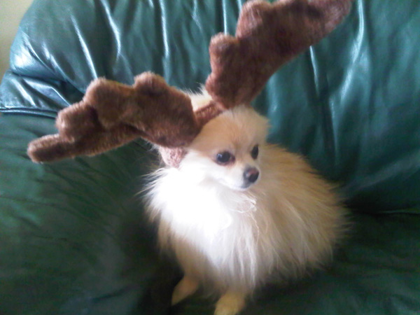 "<div class=""meta ""><span class=""caption-text "">Happy holidays from the littlest reindeer, Nigel.  (ABC7 Photo/ Margie from Joshua Tree)</span></div>"