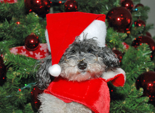 Tuxie is ready for Christmas! Happy holidays! <span class=meta>(ABC7 Photo&#47; David and Max Laurell of Burbank)</span>
