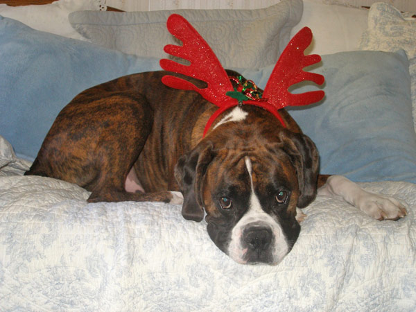 Happy holidays to the Lambert family from Buster!  <span class=meta>(ABC7 Photo&#47; Pat Lambert from Glendora)</span>