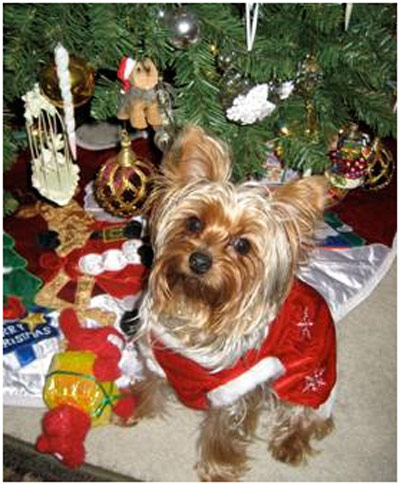 Happy holidays from Sophie the Yorkie, Paula and Jeffrey Mossman. <span class=meta>(ABC7 Photo&#47; Paula and Jeffrey Mossman)</span>