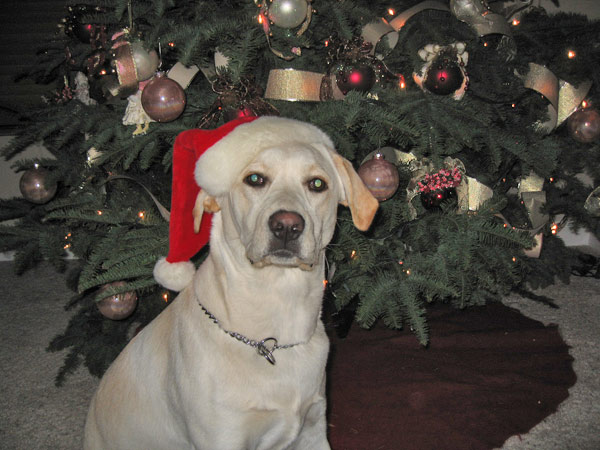 To all my doggie friends: I hope Santa brings you lots of yummy treats!! I asked Santa for a frisbee and a tennis ball!  Merry Christmas! Love, Daisy <span class=meta>(ABC7 Photo&#47; Rhonda Giles of Lake Forest)</span>