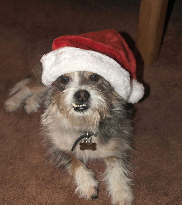 Merry Christmas from Spike the Dog!   <span class=meta>(ABC7 Photo&#47; Richard Dulin of Norwalk)</span>
