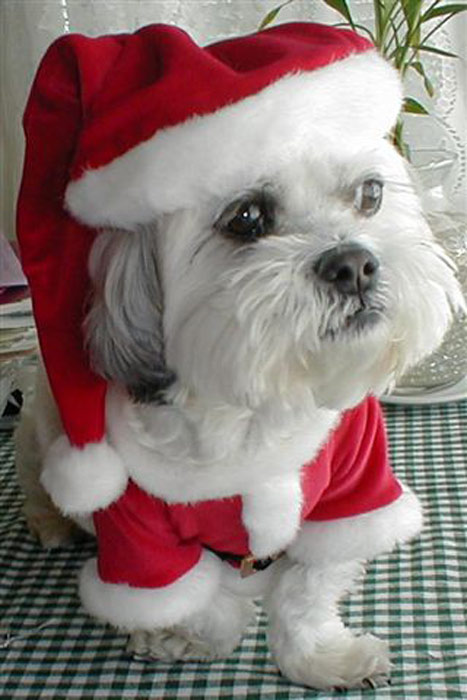 Merry Christmas to everyone from &#39;Rocky&#39; in Orange County - From Barbara Castle Smaldino.  <span class=meta>(ABC7 Photo&#47;Barbara Castle Smaldino)</span>