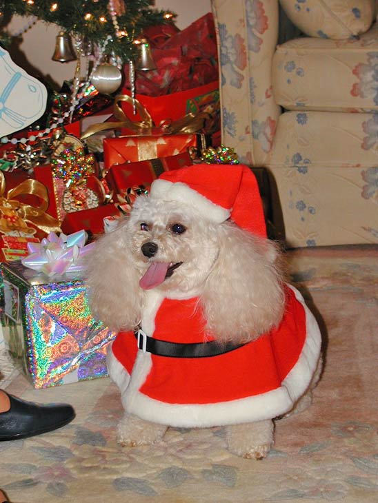 "<div class=""meta ""><span class=""caption-text "">Merry Christmas! Love, Misty (ABC7 Photo/ Teri Harvey of Orange)</span></div>"