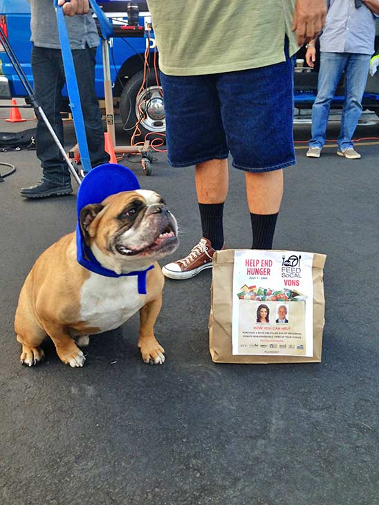 A local resident brought his bulldog to the Feed SoCal Stuff-a-Bus event in Ontario on Friday, July 26, 2013. <span class=meta>(KABC Photo)</span>