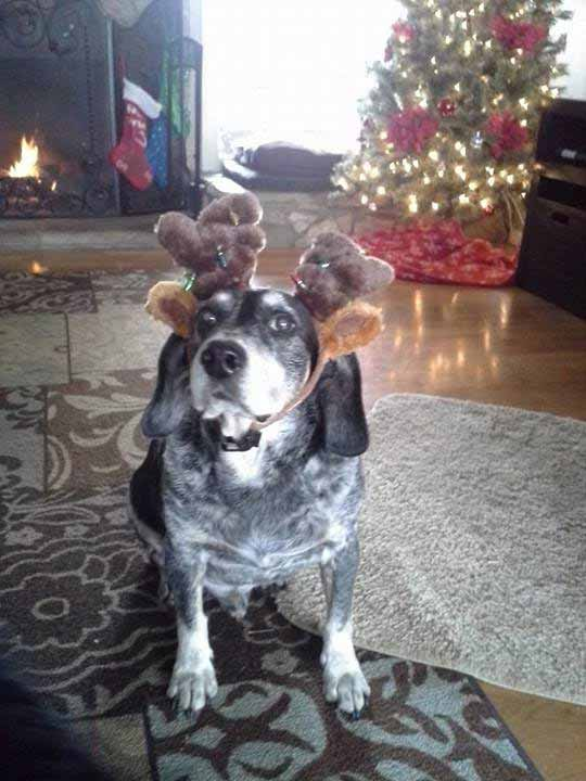 ABC7 viewer Rania Hayes sent in this snapshot of Homer donning reindeer antlers in front of a Christmas tree. Use #ABC7HomeForTheHolidays on Facebook, Twitter and Instagram to share your holiday photos with ABC7. We&#39;ll feature some of the best on our newscasts and here on abc7.com! <span class=meta>(ABC7 viewer Rania Hayes)</span>