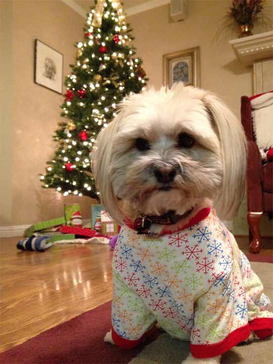 ABC7 viewer Kat sent in this snapshot of her dog in front of a Christmas tree. Use #ABC7HomeForTheHolidays on Facebook, Twitter and Instagram to share your holiday photos with ABC7. We&#39;ll feature some of the best on our newscasts and here on abc7.com! <span class=meta>(ABC7 viewer Kat)</span>