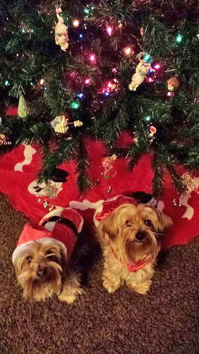 ABC7 viewer Kylie Gauf shared this snapshot.Use #ABC7HomeForTheHolidays on Facebook, Twitter and Instagram to share your holiday photos with ABC7. We&#39;ll feature some of the best on our newscasts and here on abc7.com! <span class=meta>(ABC7 viewer Kylie Gauf)</span>