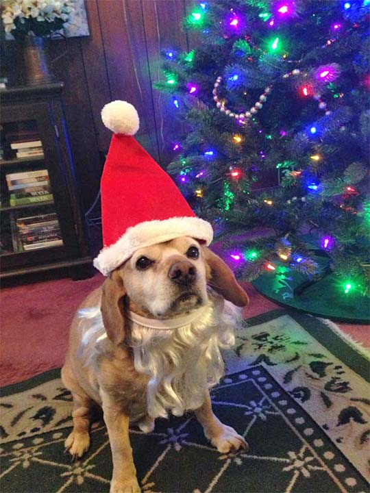 ABC7 viewer MaryJane Blacketer Kelsey shared this snapshot of her dog, Jack. Use #ABC7HomeForTheHolidays on Facebook, Twitter and Instagram to share your holiday photos with ABC7. We&#39;ll feature some of the best on our newscasts and here on abc7.com! <span class=meta>(ABC7 viewer MaryJane Blacketer Kelsey)</span>