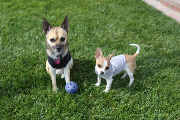ABC7 viewer Alex Jimenez from Chino sent this photo of Alonso and Shumi. Celebrate National Puppy Day by sending photos of your pup to ABC7. <span class=meta>(KABC Photo)</span>