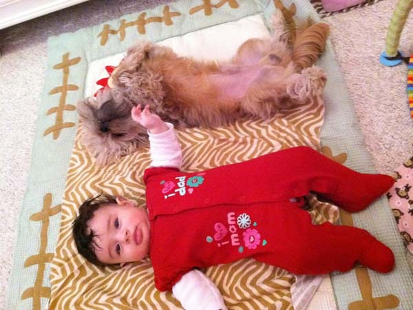 ABC7 viewer Rey sent in this photo of Bella and Buddy. Celebrate National Puppy Day by sending photos of your pup to ABC7. <span class=meta>(KABC Photo)</span>