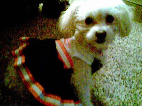 "<div class=""meta ""><span class=""caption-text "">ABC7 viewer Denise Yarbrough from Cypress sent in this photo of Betti White dressed as a cheerleader.  Celebrate National Puppy Day by sending photos of your pup to ABC7. (KABC Photo/Denise Yarbrough)</span></div>"