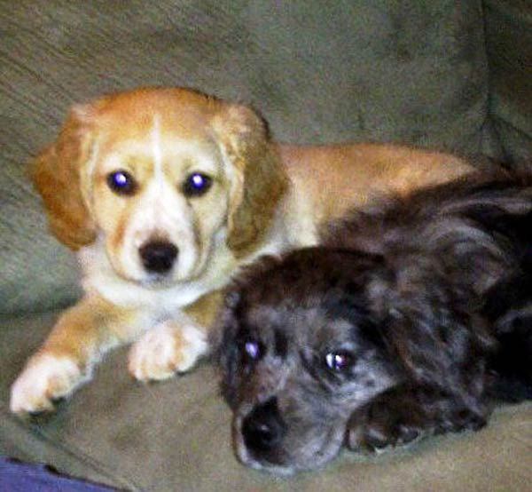 ABC7 viewer Melissa Taylor from Canyon Country sent in this photo of Butch and Cassidy. Celebrate National Puppy Day by sending photos of your pup to ABC7. <span class=meta>(KABC Photo&#47;Melissa Taylor)</span>