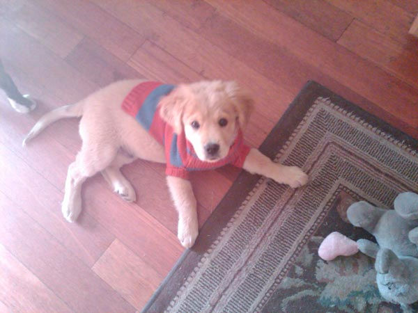ABC7 viewer Elysse from Reseda sent in this photo of Baby Chulo. Celebrate National Puppy Day by sending photos of your pup to ABC7. <span class=meta>(KABC Photo&#47;Elysse)</span>