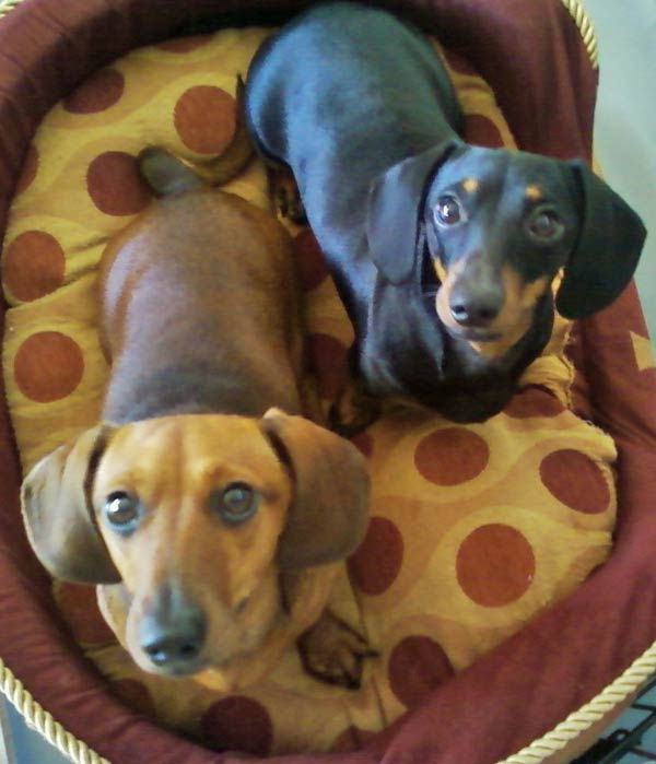 ABC7 viewer Kim Reher from Rancho Palos Verdes sent in this photo of Paprika and Cookie. Celebrate National  Puppy Day by sending photos of your pup to ABC7. <span class=meta>(KABC Photo&#47;Kim Reher)</span>