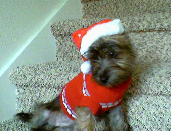 ABC7 viewer Denise Yarbrough from Cypress sent in this photo of Heidi Sue dressed as Santa. Celebrate  National Puppy Day by sending photos of your pup to ABC7. <span class=meta>(KABC Photo&#47;Denise Yarbrough)</span>