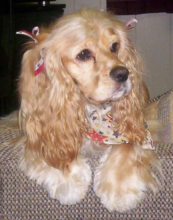 ABC7 viewer Kim Davenport from Carson sent in this photo of Hunnie, a Cocker Spaniel. Celebrate National Puppy Day by sending photos of your pup to ABC7. <span class=meta>(KABC Photo&#47;Kim Davenport)</span>