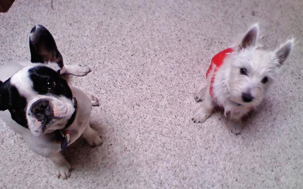 "<div class=""meta ""><span class=""caption-text "">ABC7 viewer Gloria Canchola from Northridge sent in this photo of Ike and cookie. Celebrate National Puppy Day by sending photos of your pup to ABC7. (KABC Photo/Gloria Canchola)</span></div>"
