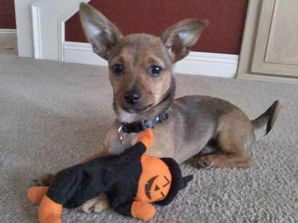 ABC7 viewer Todd Tate from Portola Hills adopted Kobe on February 2011. He said, &#39;Here&#39;s the newest Laker fan!&#39; Celebrate National Puppy Day by sending photos of your pup to ABC7. <span class=meta>(KABC Photo&#47;Todd Tate)</span>