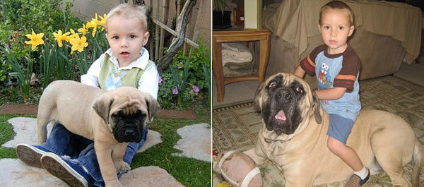 ABC7 viewer Kandy Grzebyk from Downey adopted Leroy in March 2006. On the left, Leroy is pictured with Kandy&#39;s son John as a puppy. On the right, see Leroy and John from last year. &#39;You can see how he has grown,&#39; said Kandy. Celebrate National Puppy Day by sending photos of your pup to ABC7. <span class=meta>(KABC Photo&#47;Kandy Grzebyk)</span>