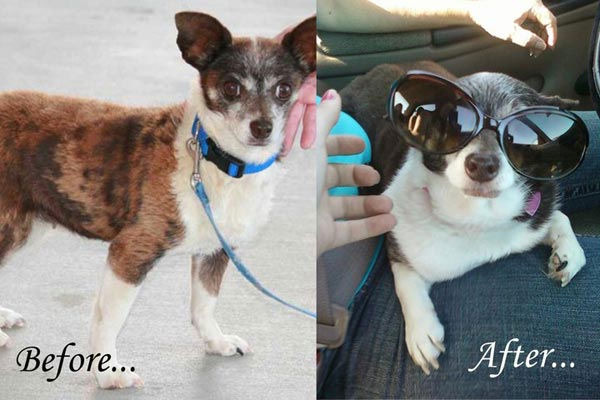 ABC7 viewer Susan Fishel from Palmdale says Lily was found under a dumpster over a year ago and was adopted through  a rescue, Halfway to Home, out of Rosamond. &#39;She has really come around,&#39; Susan says. The photo on the left is from  when Lily was found, and the photo on the right is current. Celebrate National Puppy Day by sending photos of your pup to ABC7. <span class=meta>(KABC Photo&#47;Susan Fishel)</span>