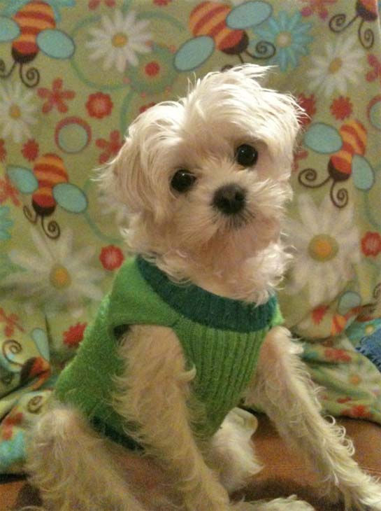 ABC7 viewer Lisa M. Fernandez from Alhambra sent in this photo of Lucky. Celebrate National Puppy Day by sending photos of your pup to ABC7. <span class=meta>(KABC Photo&#47;Lisa M. Fernandez)</span>