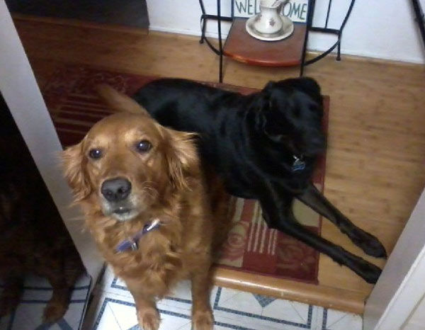 "<div class=""meta ""><span class=""caption-text "">ABC7 viewer Rochelle Herod from Long Beach sent in this photo of Madison, a four-year-old golden retriever, and Blackjack, a three-year-old Black Labrador adopted through Save Our Strays in Huntington Beach. Rochelle notes that Blackjack's original owners lost their home to foreclosure. Celebrate National Puppy Day by sending photos of your pup to ABC7. (KABC Photo/Rochelle Herod)</span></div>"