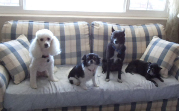 ABC7 viewer Patricia Thurman from Sun City sent in this photo of Mandy, Bailey, Kelly and Penny. &#39;All of our dogs are rescues and have enriched our lives in so many ways,&#39; said Patricia. Celebrate National Puppy Day by sending photos of your pup to ABC7. <span class=meta>(KABC Photo&#47;Patricia Thurman)</span>