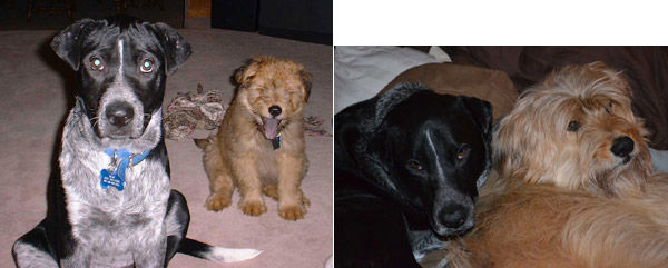 ABC7 viewer Ann Natarelli from Simi Valley adopted PC and MAC in August 2002. On the left are PC and MAC as puppies,  and on the right are current photos. She says before adoption they were abused, &#39;and now they are spoiled  rotten.&#39;She says, &#39;we saved their lives, and they have given so much  back, their unconditional love, goofiness, we get a laugh everyday from them both.&#39; Celebrate National Puppy  Day by sending photos of your pup to ABC7. <span class=meta>(KABC Photo&#47;Ann Natarelli)</span>