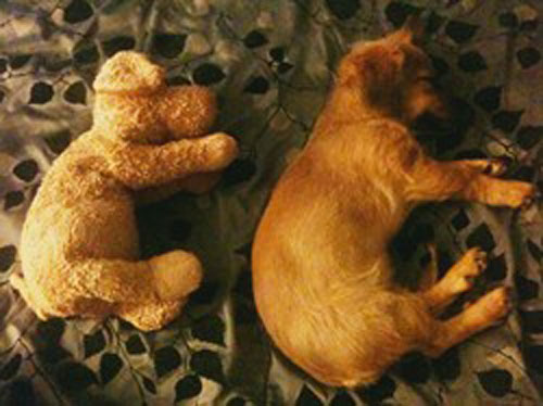 "<div class=""meta ""><span class=""caption-text "">ABC7 viewer Michele Borner from Fontana sent in this photo of 4-month-old Peanut. Michele says Peanut is a Dachshund mixed Jack Russell Terrier and Chihuahua. In this photo, she's sleeping with her stuffed dog friend.   Celebrate National Puppy Day by sending photos of your pup to ABC7. (KABC Photo/Michele Borner)</span></div>"
