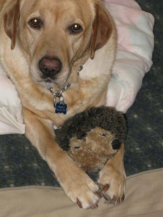 ABC7 viewer Hank Boerenko from Altadena adopted Peanut through ABC7&#39;s Pet of the Week segment in August 2009.  Celebrate National Puppy Day by sending photos of your pup to ABC7. <span class=meta>(KABC Photo&#47;Hank Boerenko)</span>