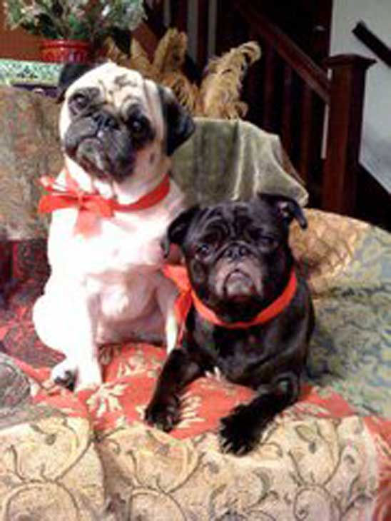 ABC7 viewer Gene Bras from Pomona sent in this photo of Petunia and Lily posing for their Christmas photo.  Celebrate National Puppy Day by sending photos of your pup to ABC7. <span class=meta>(KABC Photo&#47;Gene Bras)</span>