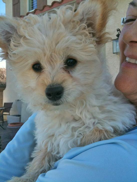 "<div class=""meta ""><span class=""caption-text "">ABC7 viewer Lisa Somerset-Heidebrink from Lancaster sent in this photo of Queen Victoria, who was adopted in December of 2010. Celebrate National Puppy Day by sending photos of your pup to ABC7. (KABC Photo/Lisa Somerset-Heidebrink)</span></div>"