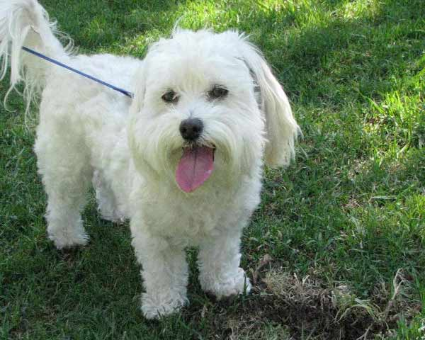 ABC7 viewer LuAnne Rohrer from Reseda adopted Scruffy in July 2005. &#39;I don&#39;t know what I would do without him,&#39; said LuAnne.Celebrate National Puppy Day by sending photos of your pup to ABC7. <span class=meta>(KABC Photo&#47;LuAnne Rohrer)</span>